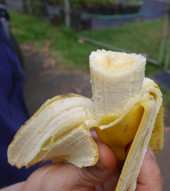 Sweet mini-bananas. Perfect combo.